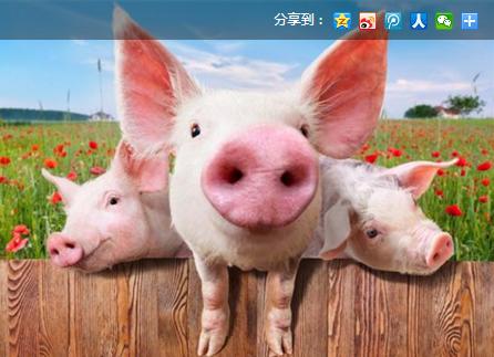 猪场需要分成多少个区