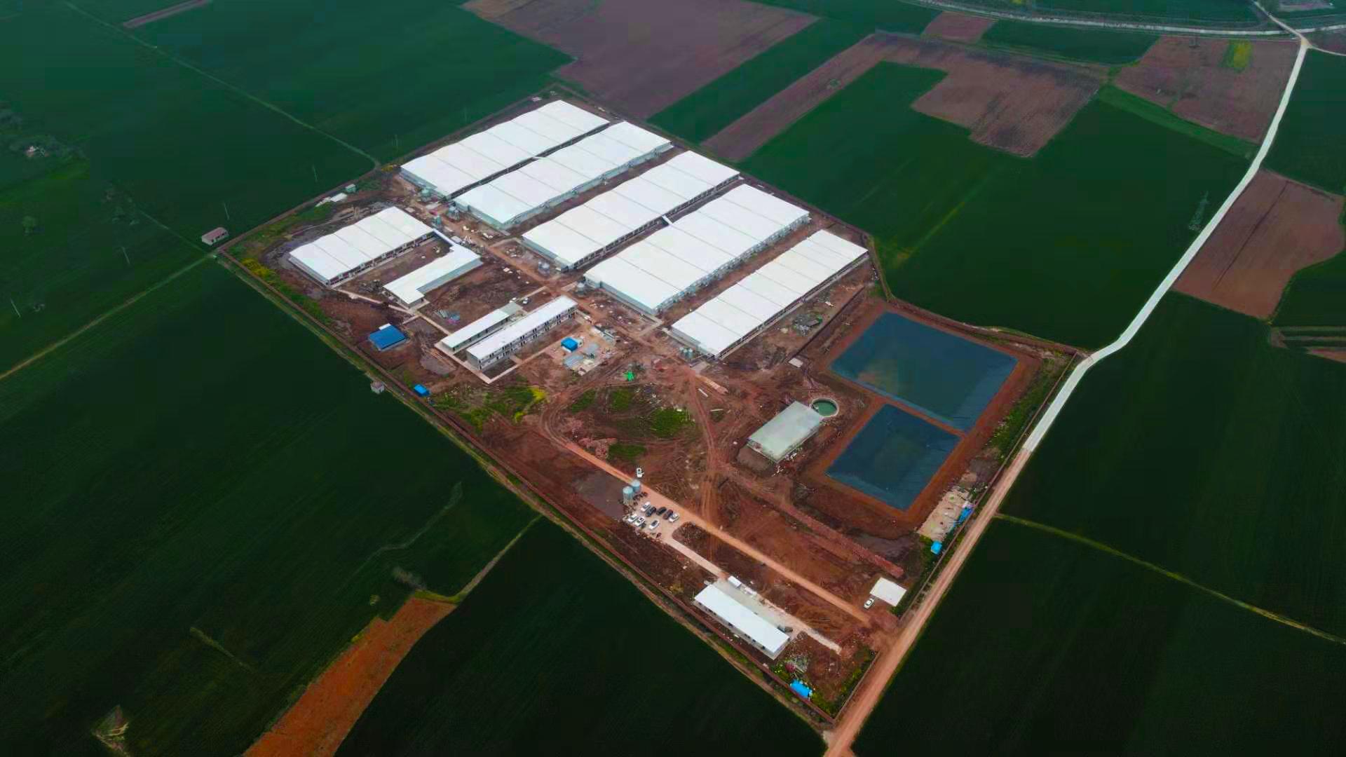 100頭母豬養豬場的設計方案
