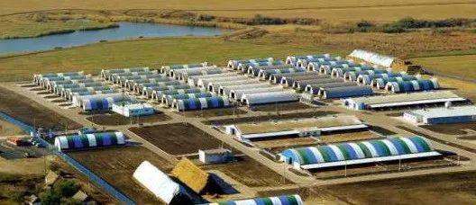俄罗斯和美国:猪场建设新模式与防控非瘟尝试!