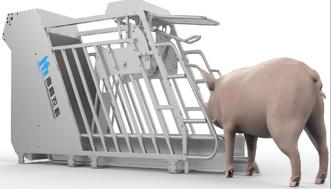 """如何減少豬場""""弱仔""""?小智倌-妊娠粥料器育仔神器提高養豬效益"""